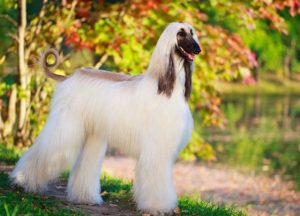 Most Expensive Dogs (Part2)